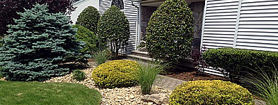 Pruning Services - Image